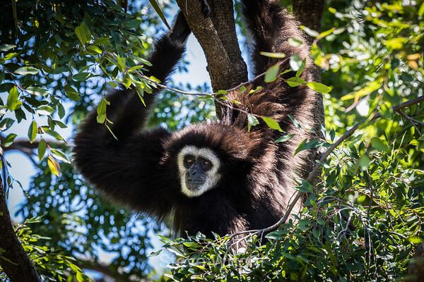 Oakland Zoo 5-21-2017