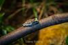 Amazon Mik Frogs - Oakland Zoo #4938