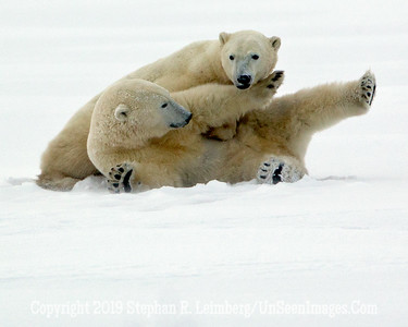Frolicking in Snow_L8I1571