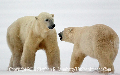 Challenging Bears_L8I0829