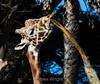 Giraffes - SF Zoo #7013
