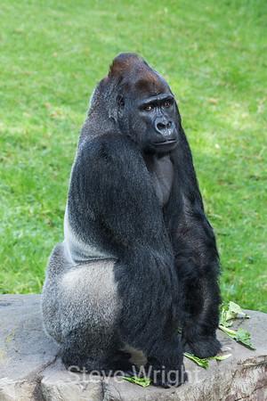 SF Zoo 3-23-2013