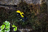 Dying Dart Frog - SF Zoo #3213