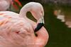 Flamingos #0227