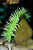 Anemone - Monterey Aquarium (60)
