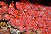 Anemone - Monterey Aquarium (58)