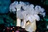 Anemone - Monterey Aquarium (57)