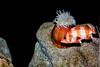 Anemone - Monterey Aquarium (56)