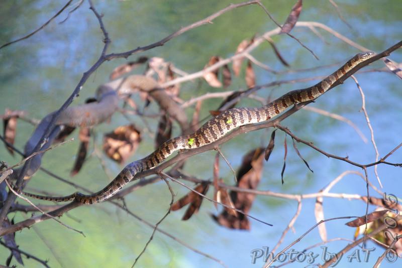 Along path to spring <br /> Ha Ha Tonka State Park