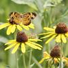 Jim Ziebol Butterfly Garden