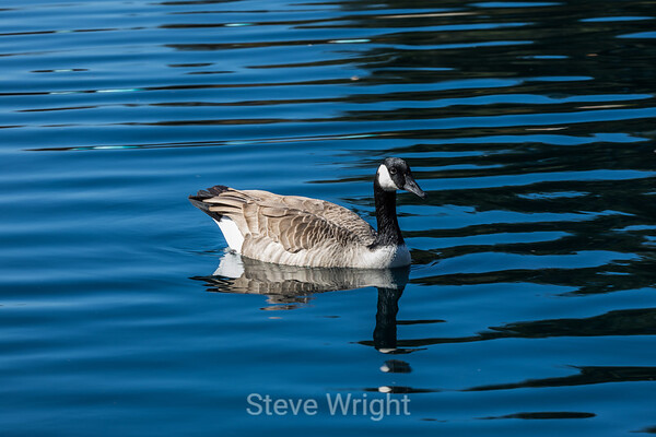 Water Fowl 10-5-2016