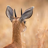 From the Viewpoint of a Steenbok