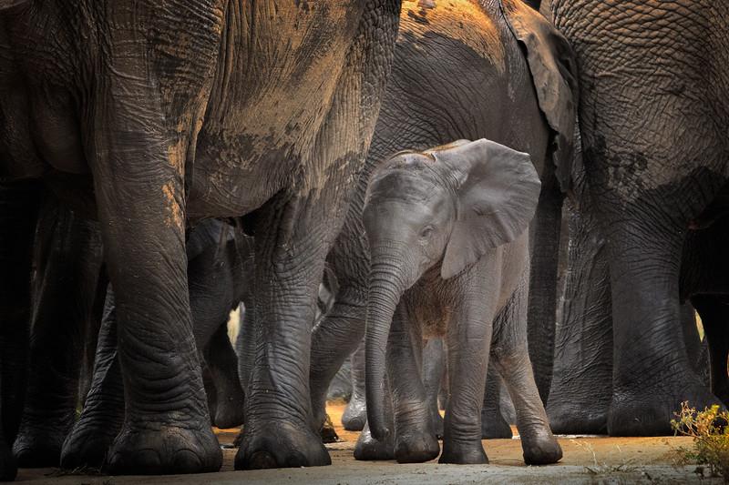 Standing Among Giants