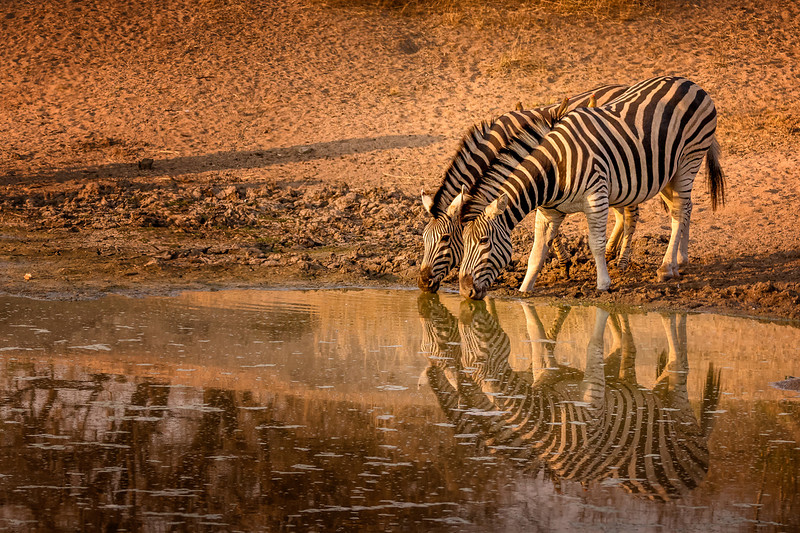 Striped Reflections