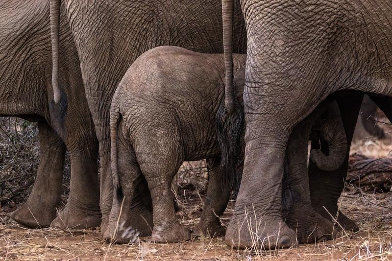Elephant Textures