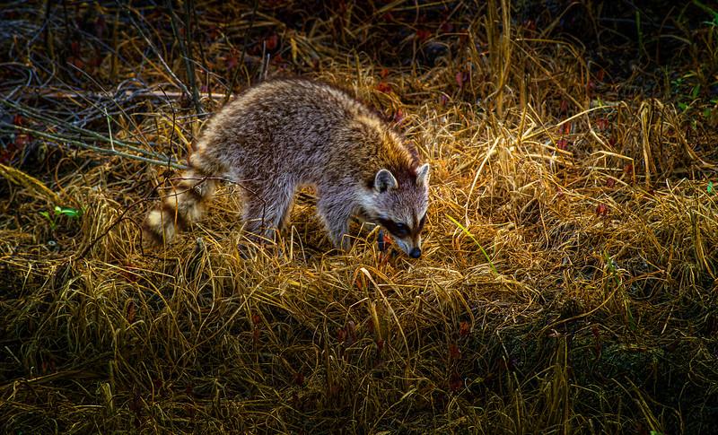 Animals&Creatures-012.jpg