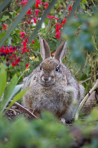 Brush rabbit by the Lily Pond.