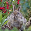 Bunny by the Lily Pond.
