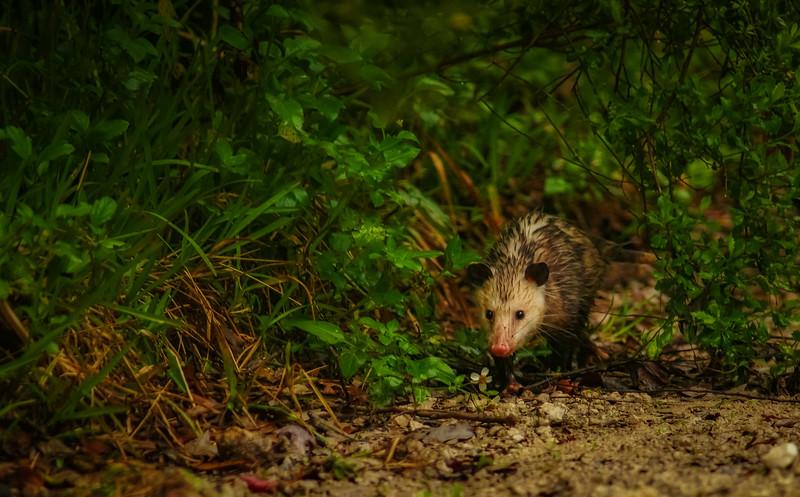 Animals&Creatures-058.jpg