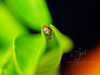 Jumping Spider ©2014 Janelle Orth