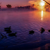 Misty Purple Lake with Geese 3