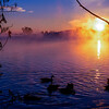 Misty Purple Lake with Geese 4
