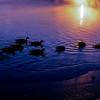 Twilight Geese 2