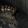 Baby Swallows Feeding