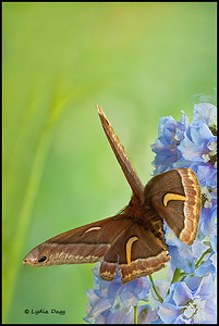 Moth, 09