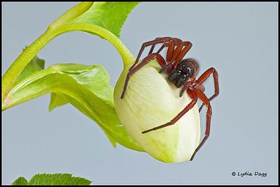 Stalking Spider, 109
