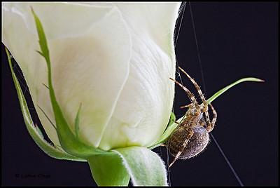 Spider abode