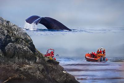 Amazing and Gigantic Graywhale, 10