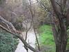 Las Lomas bridge, looking downstream