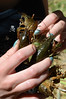 Four in hand.  Helena was an expert at handling crayfish without getting pinched.