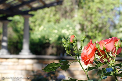 Chico Garden Center Holding Site