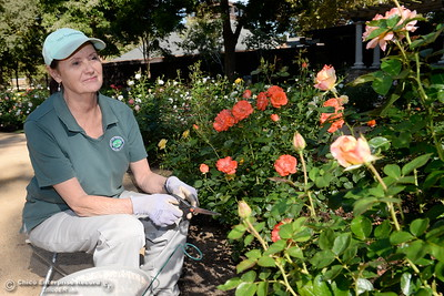 Amazing Julie Lovejoy, Rose Garden Principal Caregiver Tends To The Plants At The  C.A.R.D. Creekside Rose