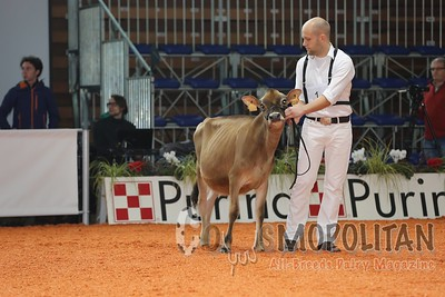 Cremona Jersey  Show 2015