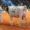 Cremona2015_L32A2710