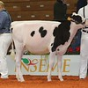 Cremona16_Holstein_L32A5945
