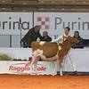 Cremona16_Holstein_L32A5956