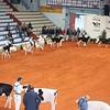 Cremona16_Holstein_L32A5950