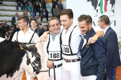 Cremona 2016  Heifer Show