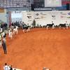 Cremona16_Holstein_L32A5951