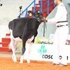Cremona16_Holstein_L32A5958