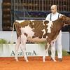 Cremona16_Holstein_L32A5946