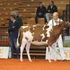 Cremona16_Holstein_L32A5942