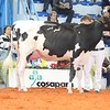 Cremona16_Holstein_L32A7246