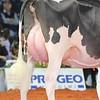Cremona16_Holstein_L32A7270