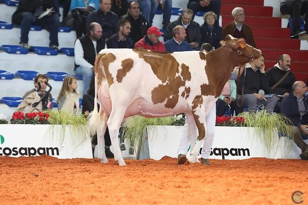 Cremona16_Holstein_L32A7244