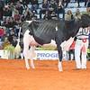 Cremona16_Holstein_L32A7265